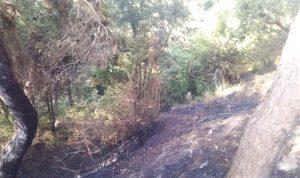 اخماد حريق في حرج صنوبر في عندقت