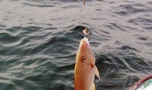 توقيف صياد يبيع أسماكًا ملوثة في البقاع الغربي