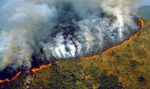 رئة العالم تحترق (بالصور)