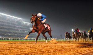 لأول مرة في العالم.. دبي تستخدم تكنولوجيا التبريد لعلاج الخيول
