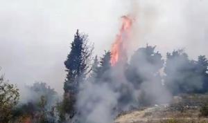 حريق في بطرماز الضنية ومناشدات لإخماده
