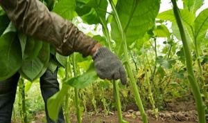 """""""إتحاد النقابات الزراعية"""": حقوق المزارعين والمواطنين بمزادات الظلام!"""