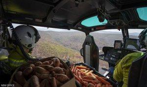 """""""طائرات الجزر والبطاطا"""" لإنقاذ الحيوانات في أستراليا"""
