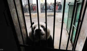 مهمة خاصة للشرطة الصينية مع الحيوانات ضد وباء كورونا