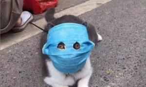 بالصور: القطط ترتدي الأقنعة في الصين