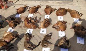 """تهريب وتناول """"حيوانات كورونا"""" مستمر في الصين"""