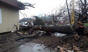 الرياح تتسبب بأضرار في الضنية وتقطع التيار الكهربائي