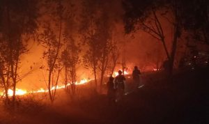 محمية أرز الشوف تحذر من خطر اندلاع الحرائق