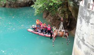"""حصان يغرق في بحيرة شوان.. و""""الانقاذ البحري"""" تتحرك!"""