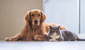 """إصابة كلب وثلاثة قطط في هولندا بـ""""كورونا"""""""