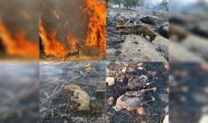 النيران تلتهم الغابات الإيرانية.. والحكومة غائبة (صوَر)