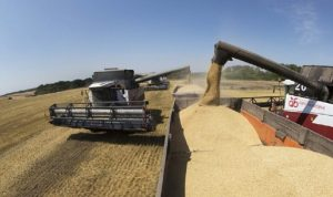 صادرات الاتحاد الأوروبي من القمح اللين تقفز 65%