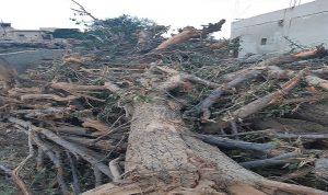 أهالي طفيل اشتكوا من أعمال جرف بساتين الأشجار المثمرة