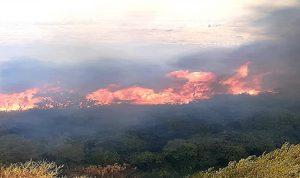 لبنان يشتعل… حرائق بالجملة (صور وفيديو)
