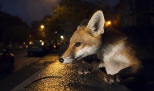 في صور… حيوان هاجم منزلين وجرح طفلين