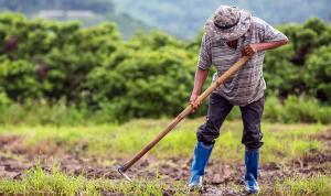 أراض زراعية تروى بمياه الصرف… ومئات الوفيات بالسرطان!