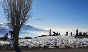 أرز لبنان وحيدًا في جباله… ضاع موسم التزلج