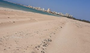 تنظيف شاطئ صور من التسرب نفطي