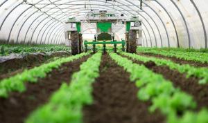 الأمن الغذائي مُهدّد: توجّه نحو الزراعة