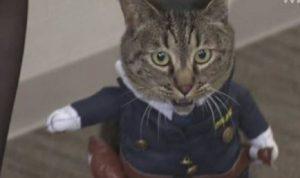"""تكريماً لدورها بإنقاذ مسن.. قطة """"مديرة شرطة"""" باليابان!"""