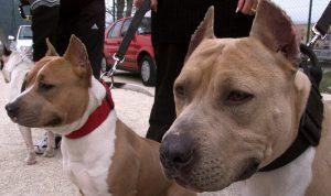 الموت بلدغة عقرب أو بعضّة كلب: فقدان أدوية داء الكلَب