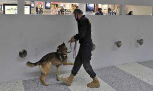 دقة عالية.. استخدام الكلاب في المطارات للكشف عن كورونا