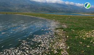 هل من يرمي سموم في بحيرة القرعون؟