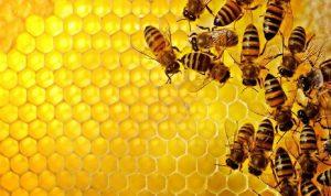 خلال ثوان… الكشف عن إصابات كورونا بواسطة النحل