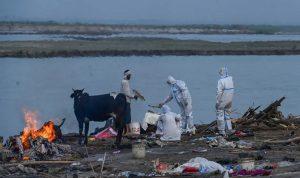 مشهد صادم… جثث عائمة لوفيات كورونا بنهر في الهند