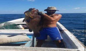 في صور… اصطياد سمكة نادرة وزنها أكثر من 20 كلغ