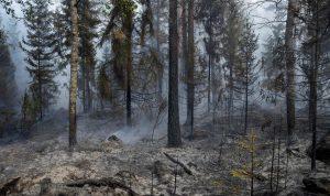 فنلندا تكافح أسوأ حريق غابات منذ خمسين عاماً