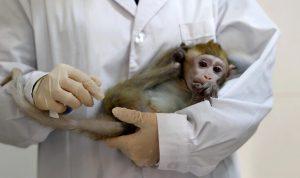 """في الصين.. تسجيل أول وفاة بـ""""الفيروس القردي B""""!"""