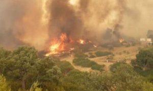 حرائق الغابات تتمدد في تونس
