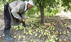 """بشرى سارة من """"القوات"""" لمزارعي التفاح"""