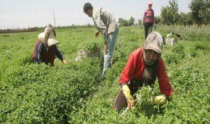 """أين لبنان من """"الجهاد الزراعي"""" و""""المقاومة الصناعية""""؟"""