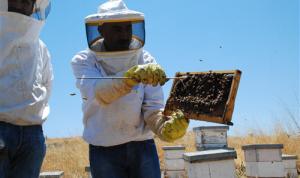 مَن يدعم مملكة النحل في لبنان لإبقائها مورداً لآلاف العائلات؟