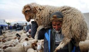 ندرة الأمطار: الثروة الحيوانية في خطر