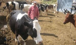 منتجو الحليب في لبنان: لعدم خفض الأسعار
