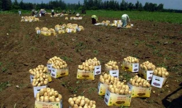 PotatoesLeban