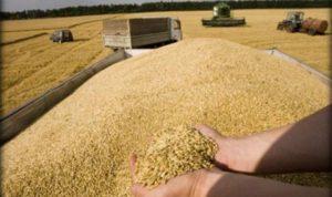 الاقتصاد: القمح المخزن في المرفأ مطابق للمواصفات المعتمدة