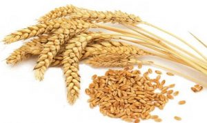 خبراء: لغط في معلومات وزارة الصحة والقمح ليس مسرطنا!