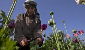 تقرير: إنتاج قياسي للأفيون في أفغانستان
