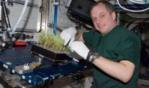 مشروع لزراعة الخسّ على المريخ!!